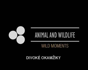Život v divočině