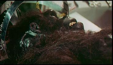 Gorila - tedy prý